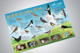 Willow & Wild Box Bird Poster Design